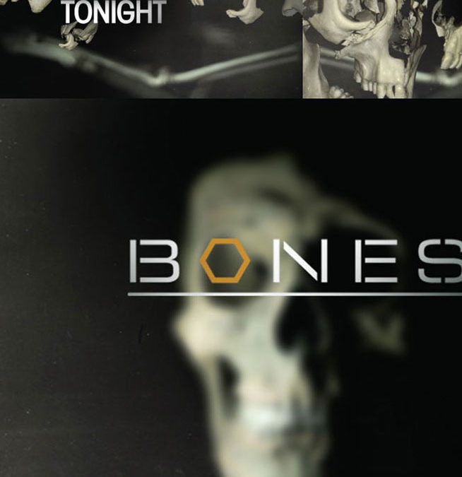 Fox-Bones Rebrand storyboards 05
